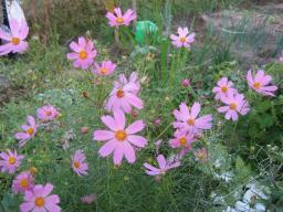市民農園の傍らで花を咲かせている
