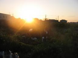 朝日に照らされ農作業