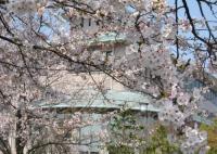 ふれあいの里前庭に咲き誇る桜