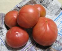 おすそ分けいただいたトマト
