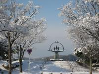 湊山公園の街路樹の雪が…