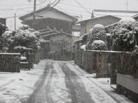 湿った雪が降ってます(午後4時ごろ、自宅近く)
