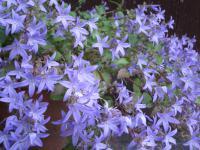 読者宅の玄関先にて咲く可憐な花